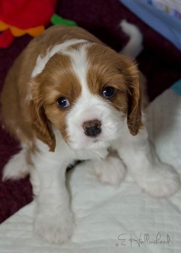 Hannah blog stanley pup